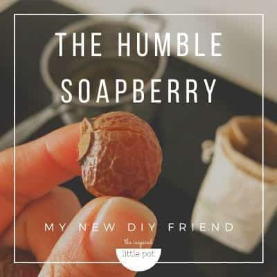 The Humble Soapberry – My New DIY Friend